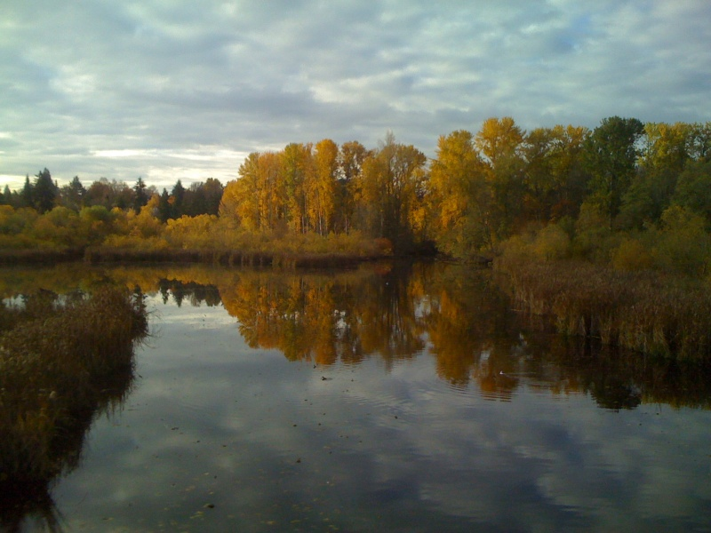 Fall in the Washington Arboretum